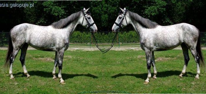 Hodowla koni,  - zdjęcie, fotografia