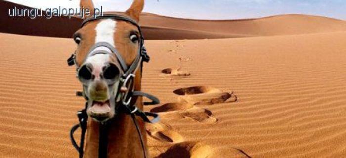 Hodowla koni, Upały zmora! - zdjęcie, fotografia