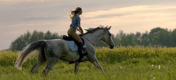 Imprezy jeździeckie, Witam Wszystkich! - zdjęcie, fotografia