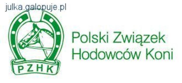 Zawody jeździeckie, Mistrzostwa Polski Młodych skokach przez przeszkody - zdjęcie, fotografia