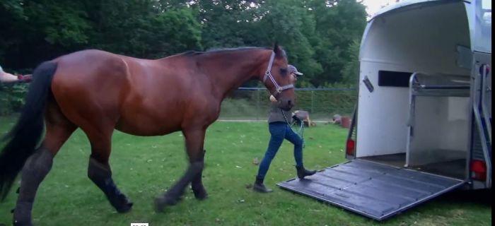 Hodowla koni, Załadunek konia przyczepy - zdjęcie, fotografia