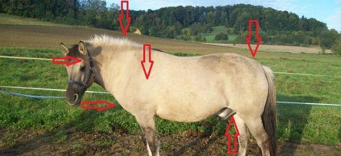 Weterynaria, dbać konia - zdjęcie, fotografia