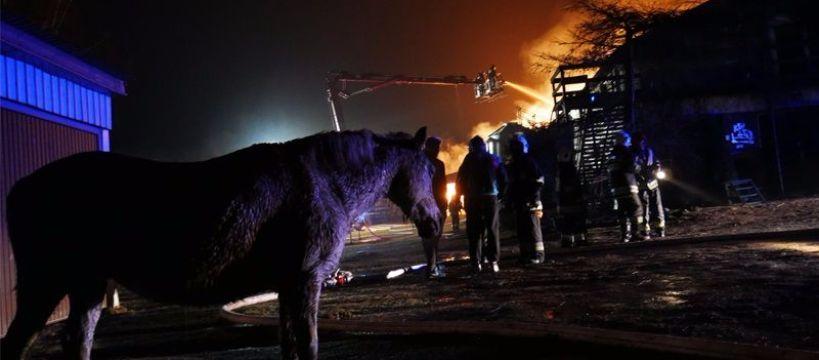 Imprezy jeździeckie, Tragiczny pożar stadniny spłonęły zwierzęta - zdjęcie, fotografia