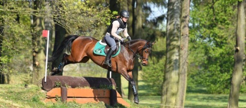 Ośrodki jeździeckie, Skoki Stragonie zawody kwietniu - zdjęcie, fotografia