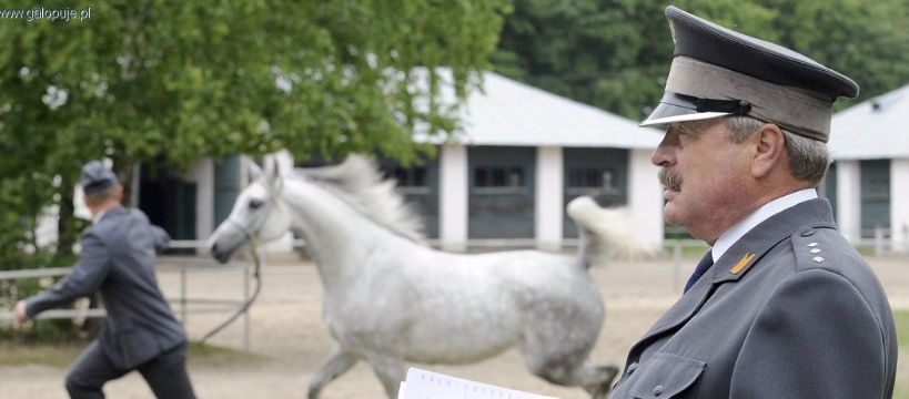Biznes jeździecki, Konkurs prezesa stadniny Janowie Podlaskim wróci Trela - zdjęcie, fotografia