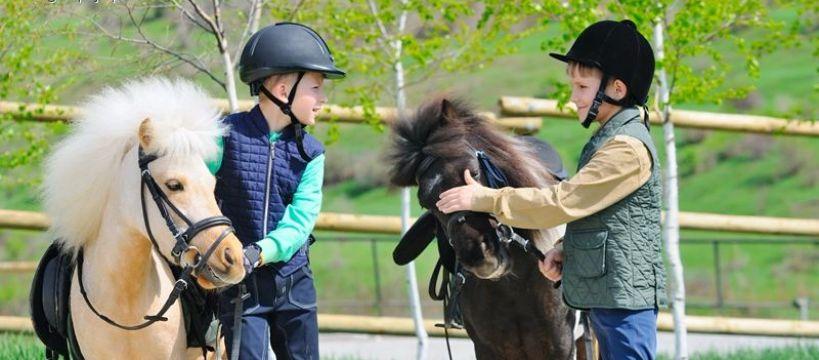 Konkursy, Budujemy regiony jeździeckie konkurs - zdjęcie, fotografia