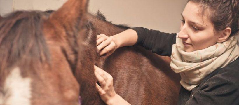 Ochrona koni, Warsztaty fizjoterapii rehabilitacji - zdjęcie, fotografia