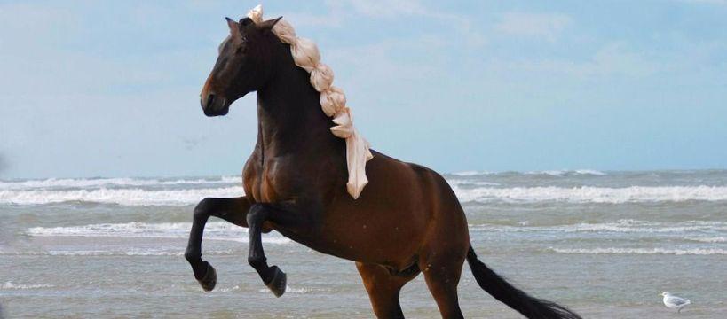 Hodowla koni, Naturalna pielęgnacja konia jeźdźca - zdjęcie, fotografia