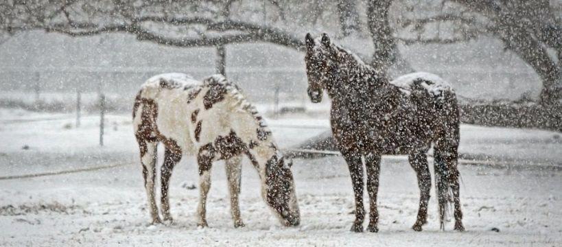 Ośrodki jeździeckie, Pomysł ferie Aromer - zdjęcie, fotografia