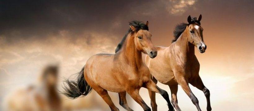Jazda konna, Konie pasja - zdjęcie, fotografia