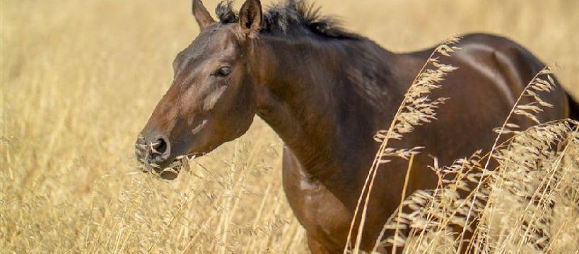 Weterynaria, wiemy końskim pocie - zdjęcie, fotografia