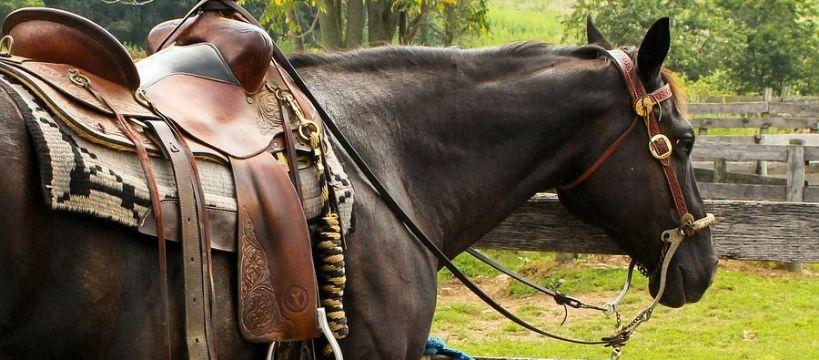 Weterynaria, grzbietu konia - zdjęcie, fotografia