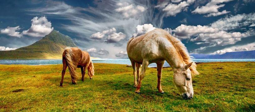 Hodowla koni, przygotować swoje pastwisko wiosnę - zdjęcie, fotografia