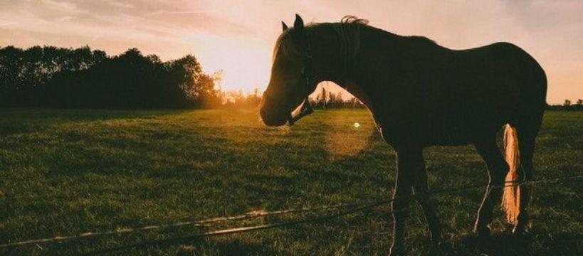 Biznes jeździecki, Sklep paszami Polecamy - zdjęcie, fotografia
