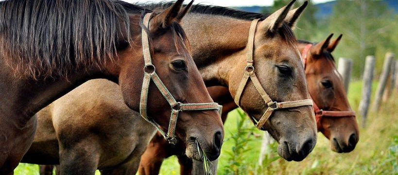 Sprzęt jeździecki, Wybór bryczesów – zwrócić uwagę - zdjęcie, fotografia