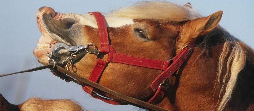Weterynaria, cieplny konia - zdjęcie, fotografia