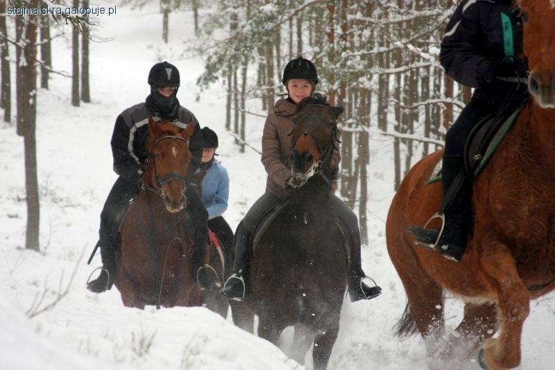 Obozy jeździeckie, Ferie siodle wszystkie województwa trwają zapisy! - zdjęcie, fotografia