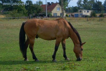 Hodowla koni, Posiadanie konia zmieniło postrzeganie - zdjęcie, fotografia