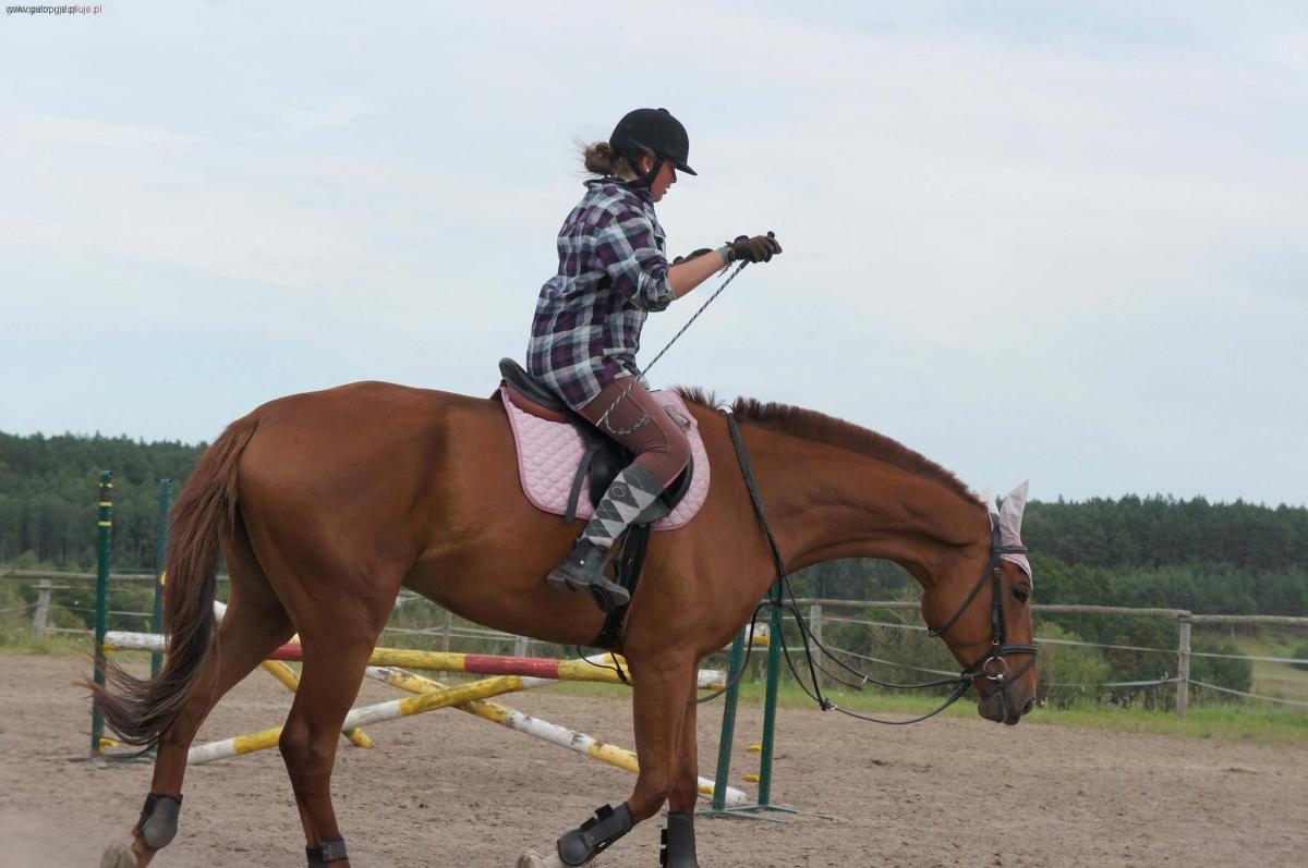 Hodowla koni, wakacjach - zdjęcie, fotografia