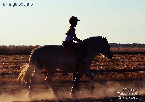 Obozy jeździeckie, Wakacje siodle 2014r Stajnia - zdjęcie, fotografia