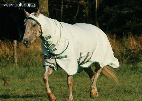 Sprzęt jeździecki, Derka owady - zdjęcie, fotografia