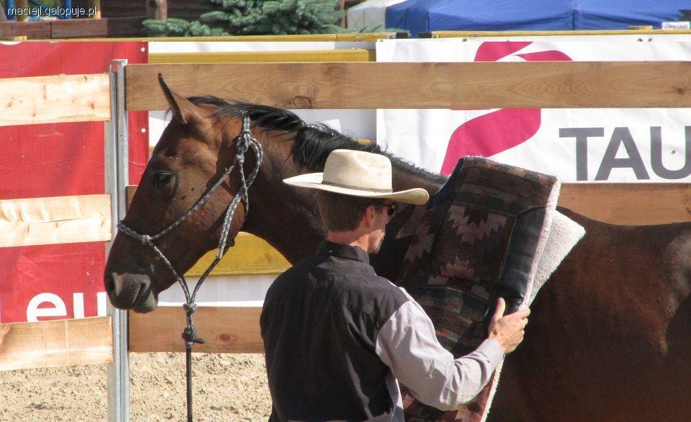 Trening konia, zaawansowanych Odpuszczanie presji - zdjęcie, fotografia