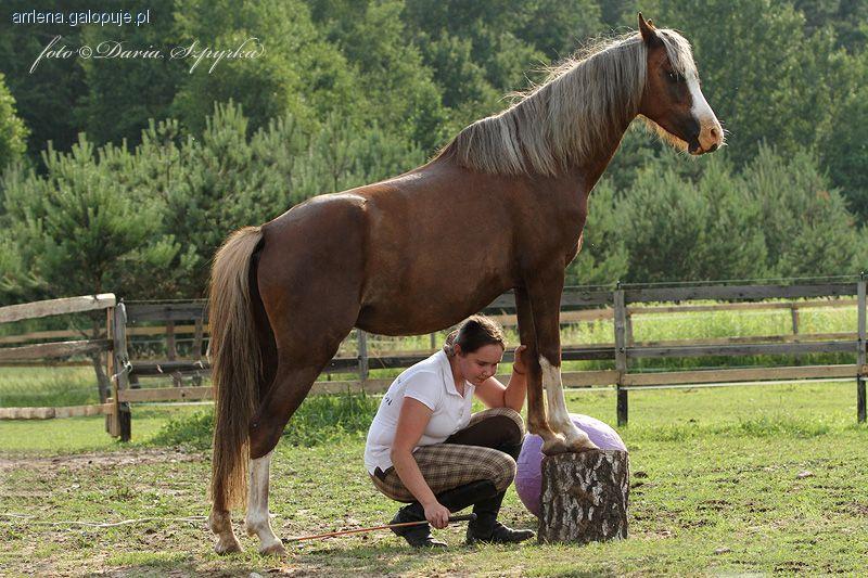 Jazda konna, Budowanie relacji końmi - zdjęcie, fotografia