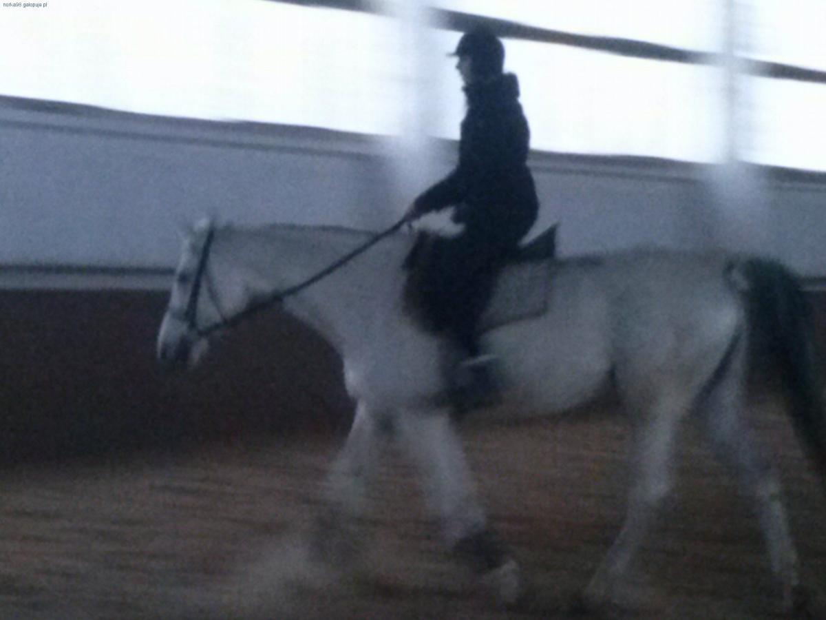 Organizacje jeździeckie, Walewice przybywam - zdjęcie, fotografia