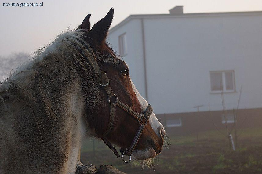Opinie blogerów, jeździeckie marka producenta - zdjęcie, fotografia
