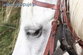 Felietony blogerów, Popularność jeździectwa - zdjęcie, fotografia