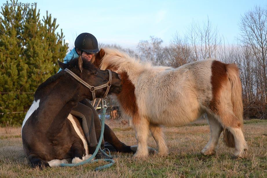 """Media jeździeckie, Wyniki konkursu fotograficznego """"Mój Koń"""" - zdjęcie, fotografia"""