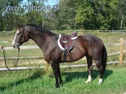 Strój jeździecki, Strój jeźdźca początkujący adept jeździectwa - zdjęcie, fotografia