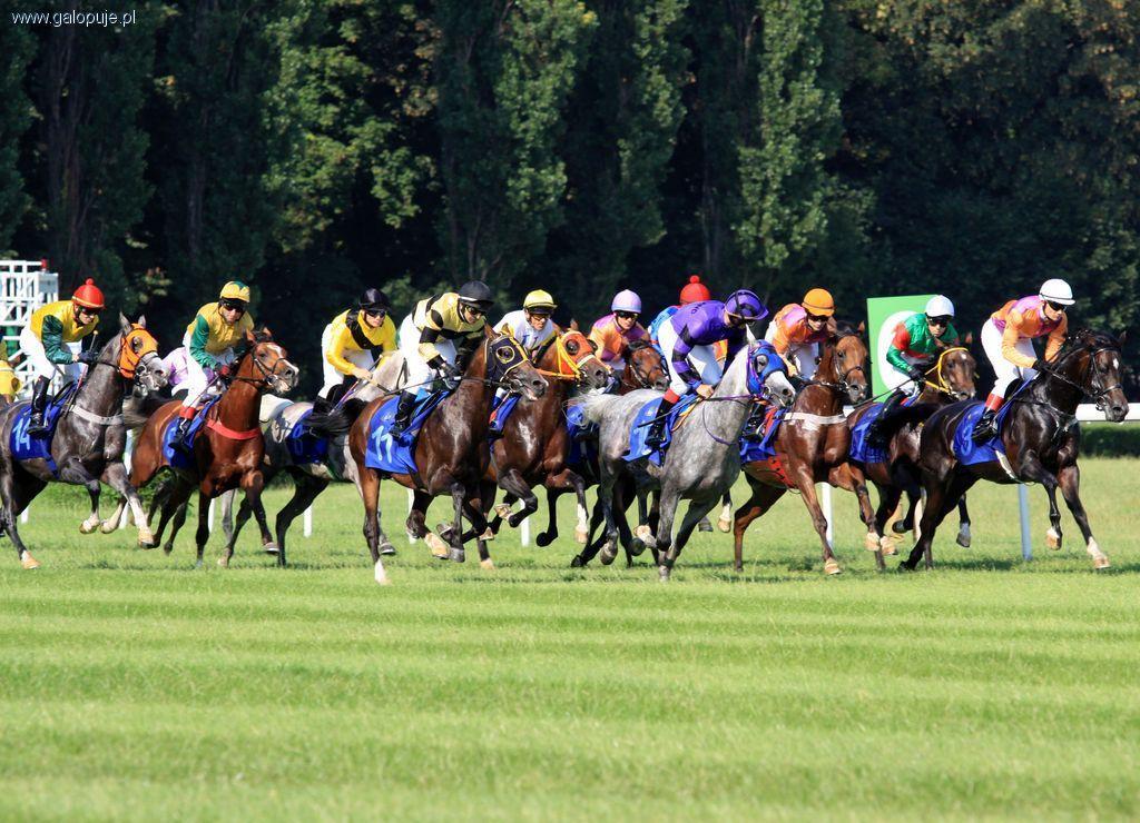 Biznes jeździecki, Rewitalizacja Służewca - zdjęcie, fotografia