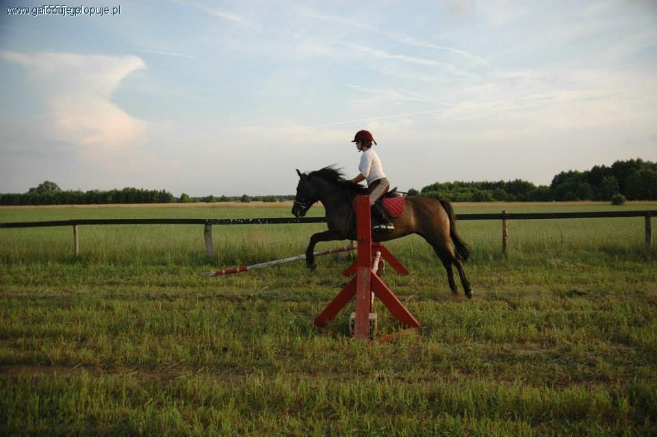 Trening konia, Rozluźnienie konia podczas skoku - zdjęcie, fotografia