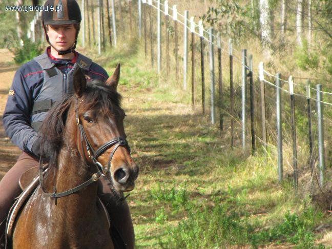 Trening konia, Zatrzymanie pędzącego konia - zdjęcie, fotografia