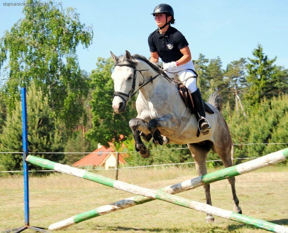 Kursy i szkolenie jeździeckie, Instruktora Jazdy Konnej - zdjęcie, fotografia