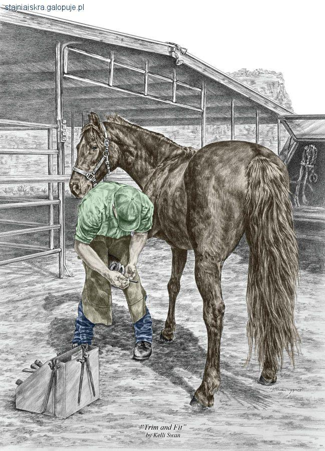 Kursy i szkolenie jeździeckie, Warsztaty Zdrowe kopyta Twojego konia - zdjęcie, fotografia