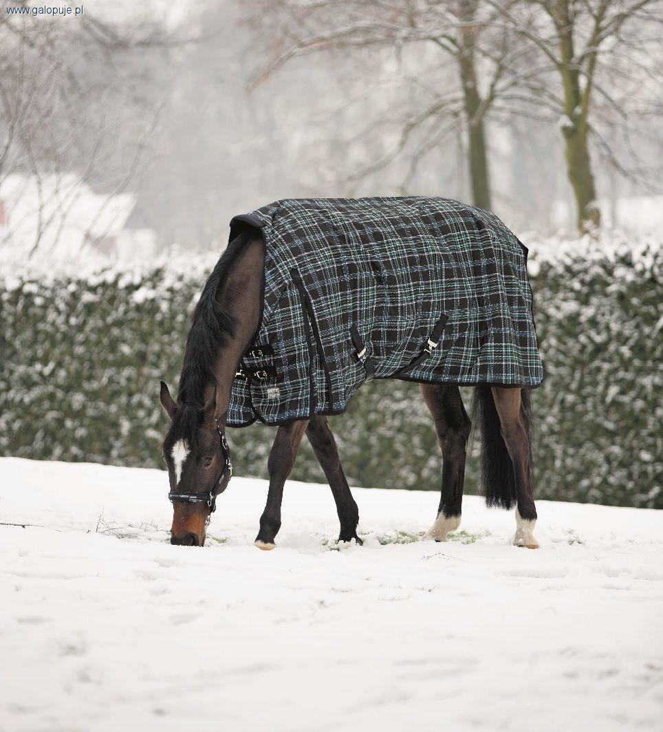 Sprzęt jeździecki, Denier - zdjęcie, fotografia