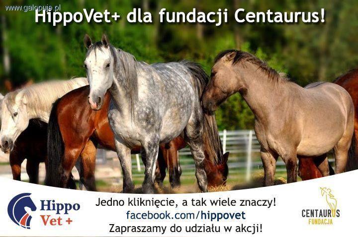 Ochrona koni, Ratuj konie! - zdjęcie, fotografia