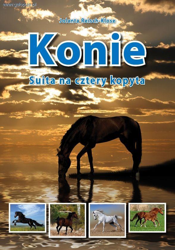 Media jeździeckie, Konie Suita cztery kopyta - zdjęcie, fotografia