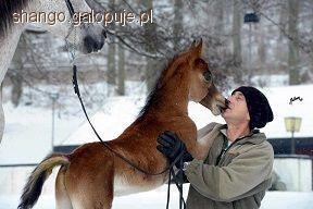 Trening konia, Przez naturę naturala - zdjęcie, fotografia