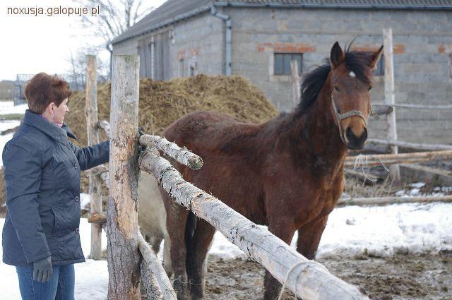 Imprezy jeździeckie, końska - zdjęcie, fotografia