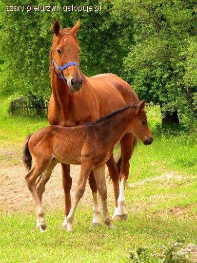 Felietony blogerów, koniach rzeźnych marzeniach - zdjęcie, fotografia