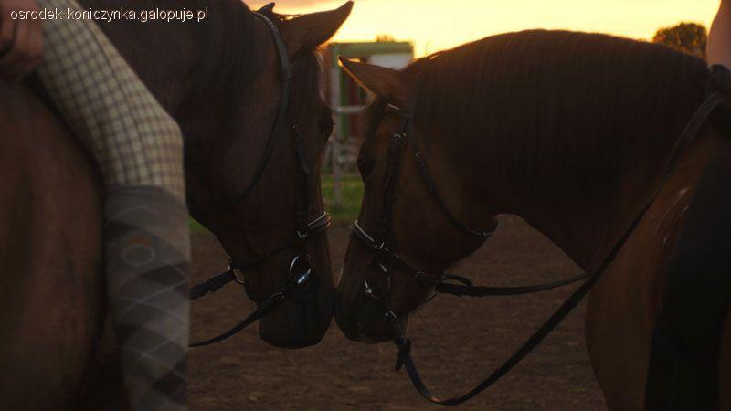 Ośrodki jeździeckie, Koniczynka konie ludzie filmik - zdjęcie, fotografia