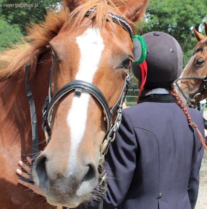 Organizacje jeździeckie, stycznia kaski obowiązkowe - zdjęcie, fotografia