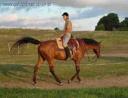 Strój jeździecki, Strój jeździecki początkujacych część - zdjęcie, fotografia