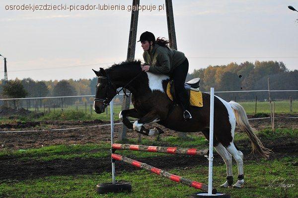 Ośrodki jeździeckie, ośrodek Opolszczyźnie - zdjęcie, fotografia
