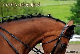 Hodowla koni, Zaplatanie grzywy ogona konia - zdjęcie, fotografia