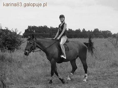 Felietony blogerów, konie kalendarium - zdjęcie, fotografia