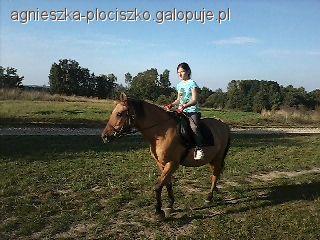 Imprezy jeździeckie, upadki konia - zdjęcie, fotografia